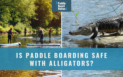 Is Paddle Boarding Safe With Alligators?