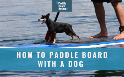 How To Paddle Board With A Dog