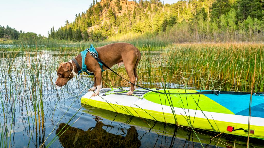 Dog Leash Paddle Board