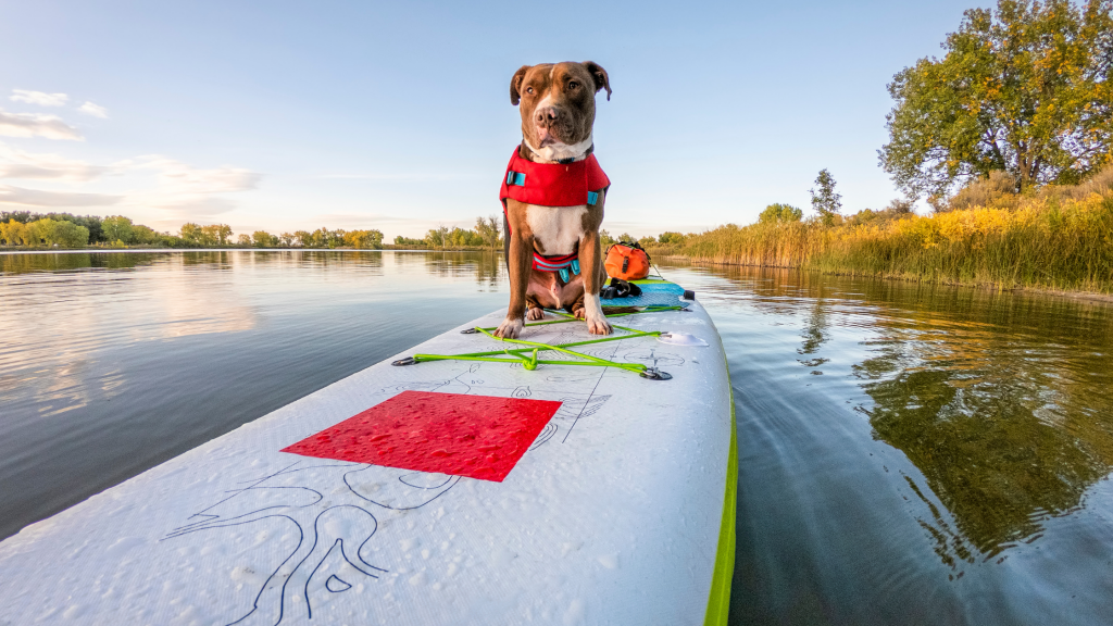 Paddle Board Surface Material
